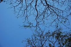 Tree, Mumbai