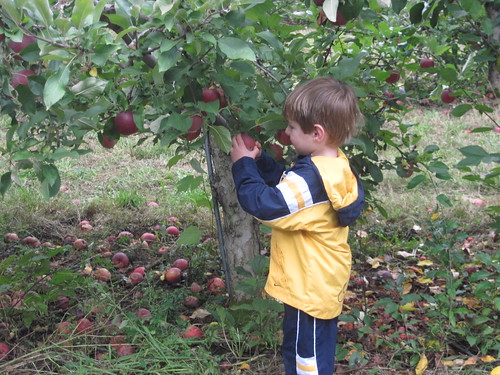 Braden apple picking