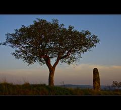 Menhir Monologue (LiesBaas) Tags: france tree field grass rock stone burgundy boom gras frankrijk bourgogne veld arbre steen menhir colourphotography bourgondi kleurenfotografie liesbaas menhirmonologuebyliesbaas