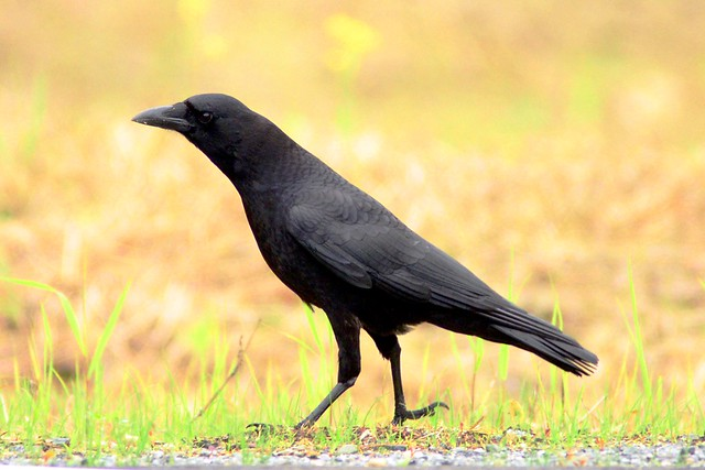 hudson crow 4