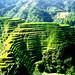 Mountain of Rice