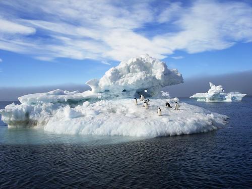 penguins in antarctica. Antarctica - Adelie Penguins