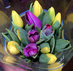 tulips for Easter (Per Ola Wiberg ~ Powi) Tags: flowers mars easter march perception niceshot tulips sweden loveit harmony sverige blommor 2008 soe flowerbox musictomyeyes aclass psk tulpaner favoritephotos blueribbonwinner floralfantasy mostintresting eker fineartphotos photopassion mywinners abigfave anawesomeshot irresistiblebeauty diamondclassphotographer flickrdiamond flowerpicturesnolimits thepowerofflowers empyreanflowers flowersarebeautiful sperhearts heartawards flckrhearts goldsealofquality flickridol goldstaraward flickrestrellas excellentsflowers arealgem highqualityimage ilovemypics colouryourlife qualifiedmembersonly beautifulshot awesomeblossoms naturestreasures naturegreenstar unforgettableflowers floralfantasia lovely~lovelyphoto mostbeautifulpictures flowersonflickr addictedtoflower selectedflowers bestpeopleschoice weloveallflowers thenaturessoul flowersmania hellofriend flowerswonder elisfavoriteflowers lovelyflowersgroup