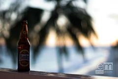 Banks. (Expectation Maximization) Tags: ocean sunset beach bokeh palmtree barbados banks bajan canonef50mmf14usm aperturepriority canoneosdigitalrebel shootwideopen sooc incidentalbokeh bajanforbeer