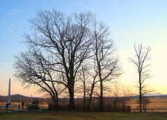 The Copse of Trees on Cemetery Ridge - Gettysburg Battlefield (smokejmt) Tags: trees tree history cemetery pennsylvania historic gettysburg civilwar battlefield cemeteryridge