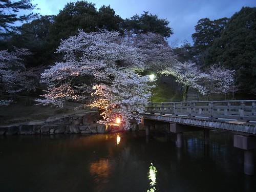 浮見堂(夜桜)-04