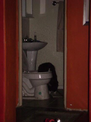 hubcap toilet 001