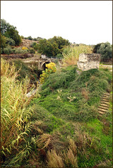 river Evrychou /   (-Filippos-) Tags: bridge green rural river countryside cyprus  wildvegetation   92007    evrychou karkotis