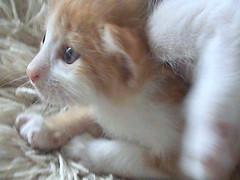 snoopy (bluewinx15(BACK)) Tags: blue pakistan pet cats baby pets cute animal animals cat eyes kitten pakistani
