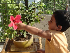 The Happy Gardener (sytoha / Syed Touhid Hassan) Tags: boy baby plant flower nature childhood chi