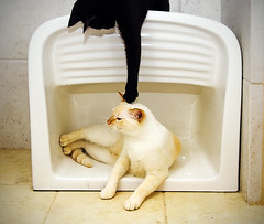 How To Be A Cat, Lesson 15: Starting a Fight (Jim Skea) Tags: sink kitlens nikond50 yuki gato yami tanque jimsk speedlightsb600 afsdxzoomnikkor1855mmf3556ged