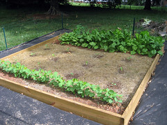 lettuce, spinach, eggplants and soybeans in the vegetable garden