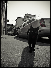 Curious (Benoa) Tags: street city shadow pet france car animal cat eyes chat pavement citroen voiture ombre toulouse rue ville trottoir goudron minimes