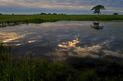 (baldwinm16) Tags: sunset reflection nature water illinois naperville waterreflections springbrook springbrookprairie crookedslough illinoisforestpreserve springbrookprairieforestpreserve