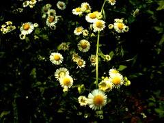 completando... (Elanorya) Tags: natura fiori terra aria theperfectphotographer