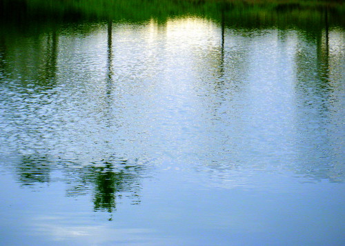 Fishpond Reflection