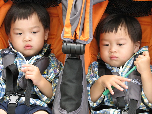 Twins in the stroller