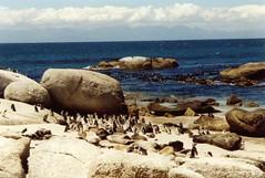 Kapstadt (ALUmuc) Tags: capetown sdafrika kapstadt southafrice