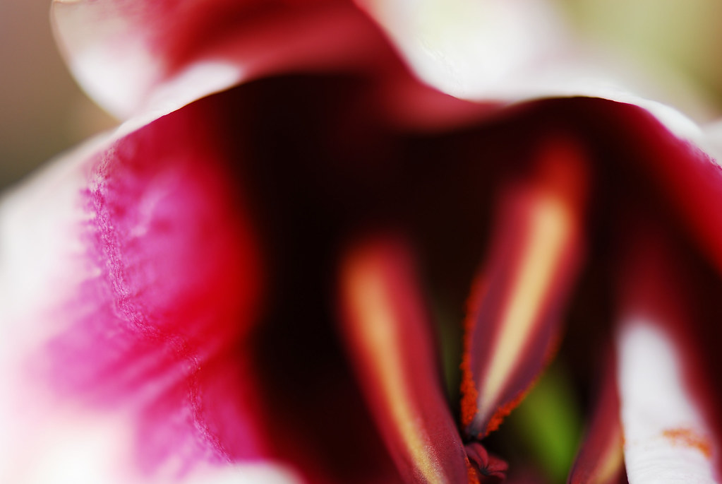 Madre Flor