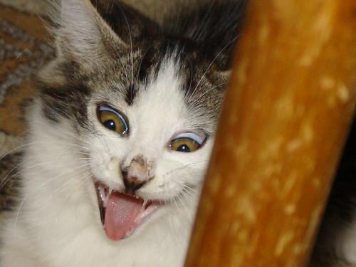 Gato que da miedo