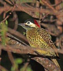Campo flicker (Adrian Shepherd) Tags: brazil pantanal flicker