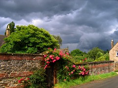 Between the Afternoon Showers in the Cotswolds (UGArdener) Tags: roses england english village unitedkingdom britain july cotswolds gloucestershire stormclouds pinkroses englishsummer summerafternoon briefsunshine upperoddington betweentheshowers englishtravel