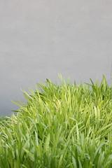 Restaurant Eloise/ Puntarelle! (shunafish) Tags: northerncalifornia restaurant delicious lovely elegant sebastopol whiteonwhite eloise northbay worththetrip beautifulsetting classicfood professionalchefs secretgardenesque restauranteloise ginevraivorson erickorsh chefowners californiamediterraneancuisine dinnerwithdb prunerestaurantconnection husbandwifeteam whimsicalaesthetic wildflowersherbgarden fruitandveggardens anentiredinnerofappetizers stretchingtheingredientdrivencuisinepastitscomfortzoneintoamenualittlemorerefined ilovedphotographinghere friendlychefs touroftheirgardensbetweencourses chefcomraderie newyorkchefswhomigratewest sohappytheyrehere