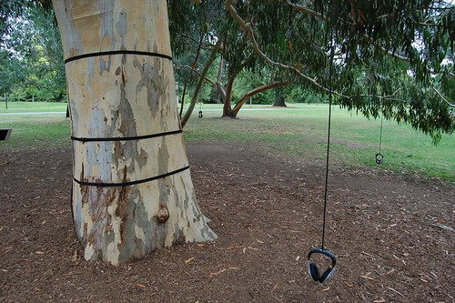 Eucalyptus sound installation