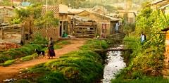 African village (dani.Co) Tags: africa trip summer vacation grass lady creek river children nikon holidays village path central goat uganda d200 equator anawesomeshot danico flickrdiamond theperfectphotographer