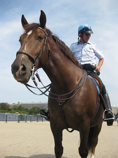 Mounted policeman at Jefferson Memorial