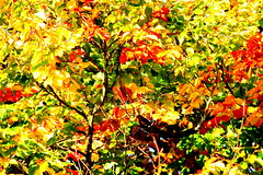 Autumnal Patterns (Curry Boy) Tags: autumn abstract tree leaves autumnal caversham pattens curryboy