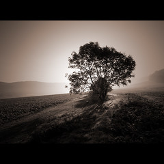 misty morning in october II (Paul Petruck) Tags: morning autumn bw mist tree nature misty sepia sunrise landscape thringen jena thuringia blacknwhite seenintheinterestingnessarchives
