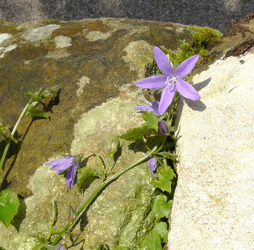Flower inautumn sun