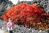 """hana autumn nagoya (Steve-kun) Tags: park autumn fall japan garden hana jp nagoya flickrcom odaka stephendraper stevedraperpictures draperphotography stephendraperphotography ス千ーブ 日本 flickrjp 日本 """"日本 flickrflickr jpcom"""