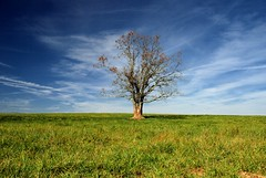 Tree (MilkaWay) Tags: autumn sky tree fall field clouds one meadow pasture lonetree madisoncounty ruralgeorgia p1f1 ga172