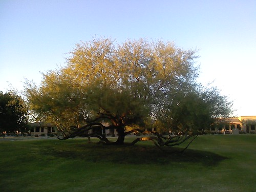 A Sunlit Tree in the Park