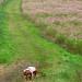 ダックスフンド:Uchiyama ranch