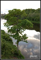 The gentle Tweed at Coldsteam (Glen TK) Tags: tree river landscape scotland coldstream rivertweed berwickshire scottishborders smeatonsbridge td12 rnbtweed coldstreamset