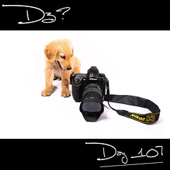 Day 107: Like a baby... (L S G) Tags: dogs goldenretriever puppy studio sb600 d3 lsg project365 365days strobist 365daysproject nikond3