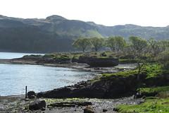 Kerrera walk (19) (Pink$oda) Tags: castle scotland lambs loch kerrera lomand gylen