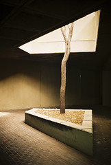 (Design.Her) Tags: light shadow newmexico tree film architecture 35mm dark campus minolta geometry albuquerque fujifilm 135 superia400 unm upward universityofnewmexico fineartsbuilding subtraction minoltaxe7 designher woodwardhall