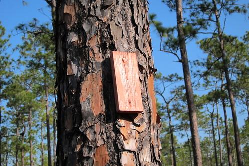 Florida Trail 097
