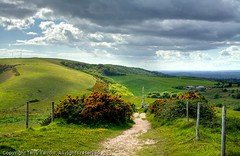 The Purbeck Hills (Terry Yarrow) Tags: uk light england sky broken clouds canon landscape hills dorset obelisk purbeck rebuilt gorse eos5d
