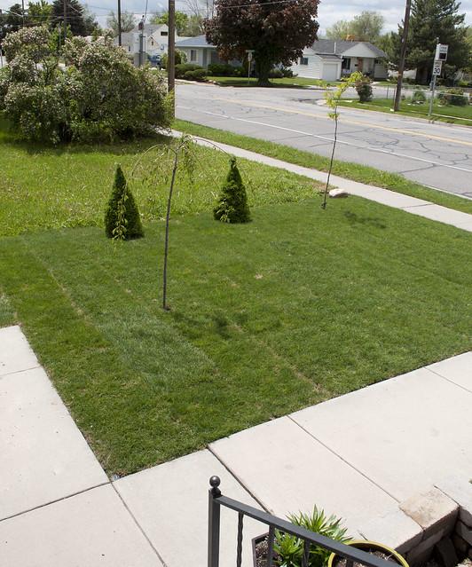 bungalow.yard.1043