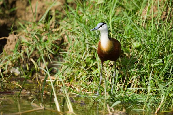 RYALE_Rwanda_Uganda_Safari-224