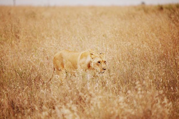 Safari 30