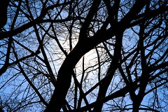 glowing branches