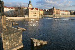 Reflections on the Vltava (Laura Livesey) Tags: travel prague charlesbridge vltava prague2008