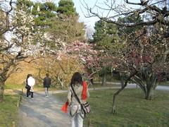 IMG_1566 (michelleness) Tags: japan kyoto nijo