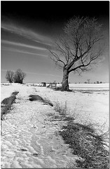 Abandoned Farm-2 (Naeroscatu) Tags: winter blackandwhite bw snow ontario abandoned film kodak farm 28mm d76 developer pentaxkx smcpentax